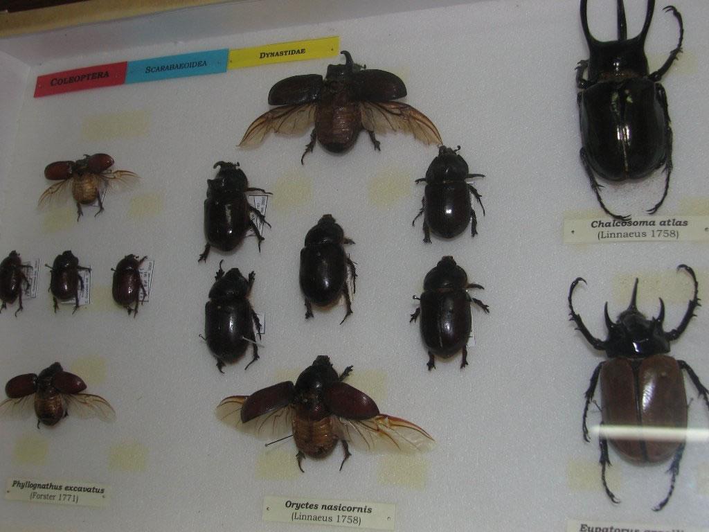 Insectos De Casa Gallery - Como Evitar Los Mosquitos En Casa ...